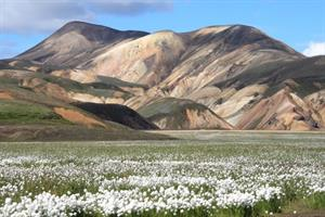 Beautiful colours of Landmannalaugar
