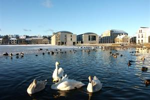 'Tjörnin' is the home to several species of ducks and these beautiful swans