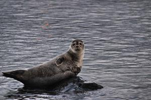 A seal near the shore