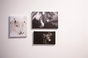 Photos of the Icelandic horse decorate the walls of the guesthouse.