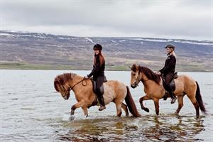 Enjoy horse riding in the beautiful nature