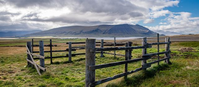 WestIceland_fence_ozzo.jpg