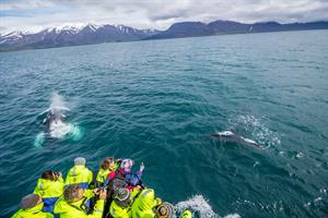 Humpback Whales, Minke Whales and White Beaked Dolphins are among the most common whale species spotted on the tour