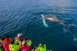 Enjoy a whale watching tour from Hauganes
