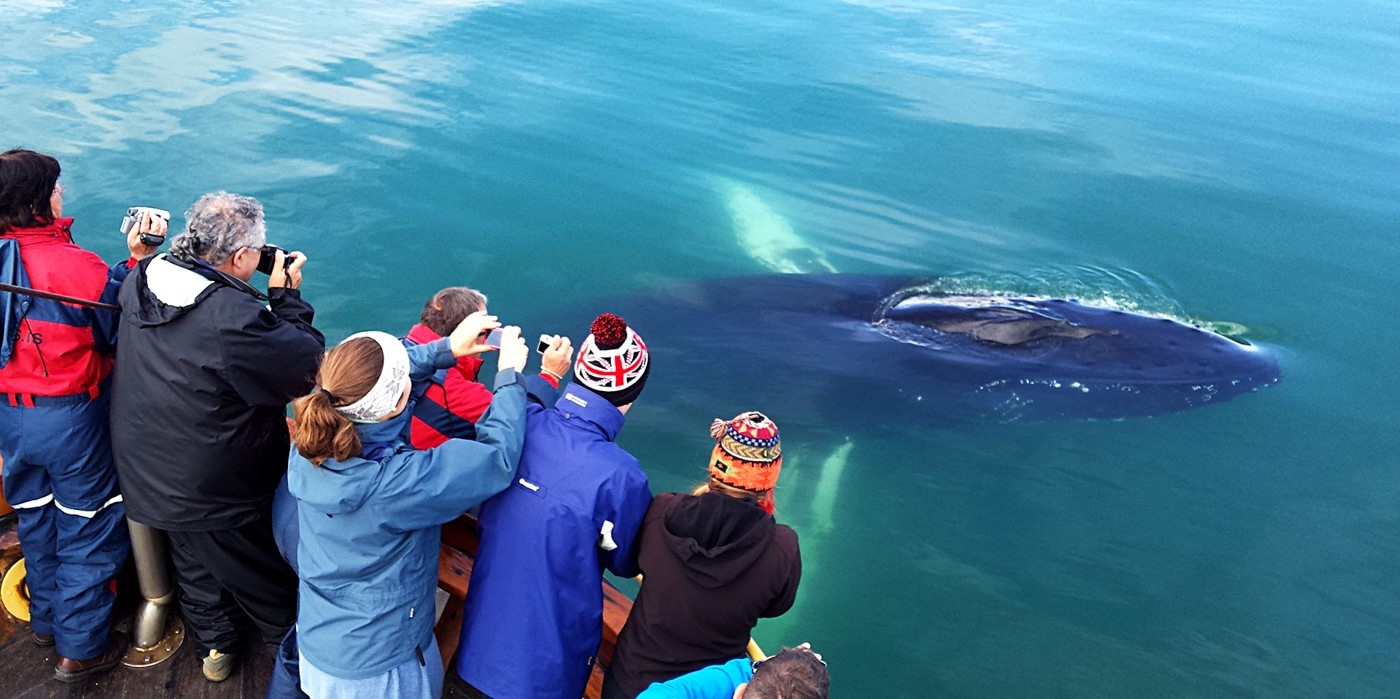 Whale Watching Hauganes North Iceland