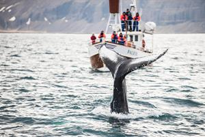 Whale Watching Experience in Iceland