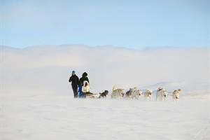 Dog Sledding Tour in South Iceland