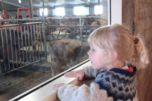 At the café, one can observe the life in the cowshed through the windows