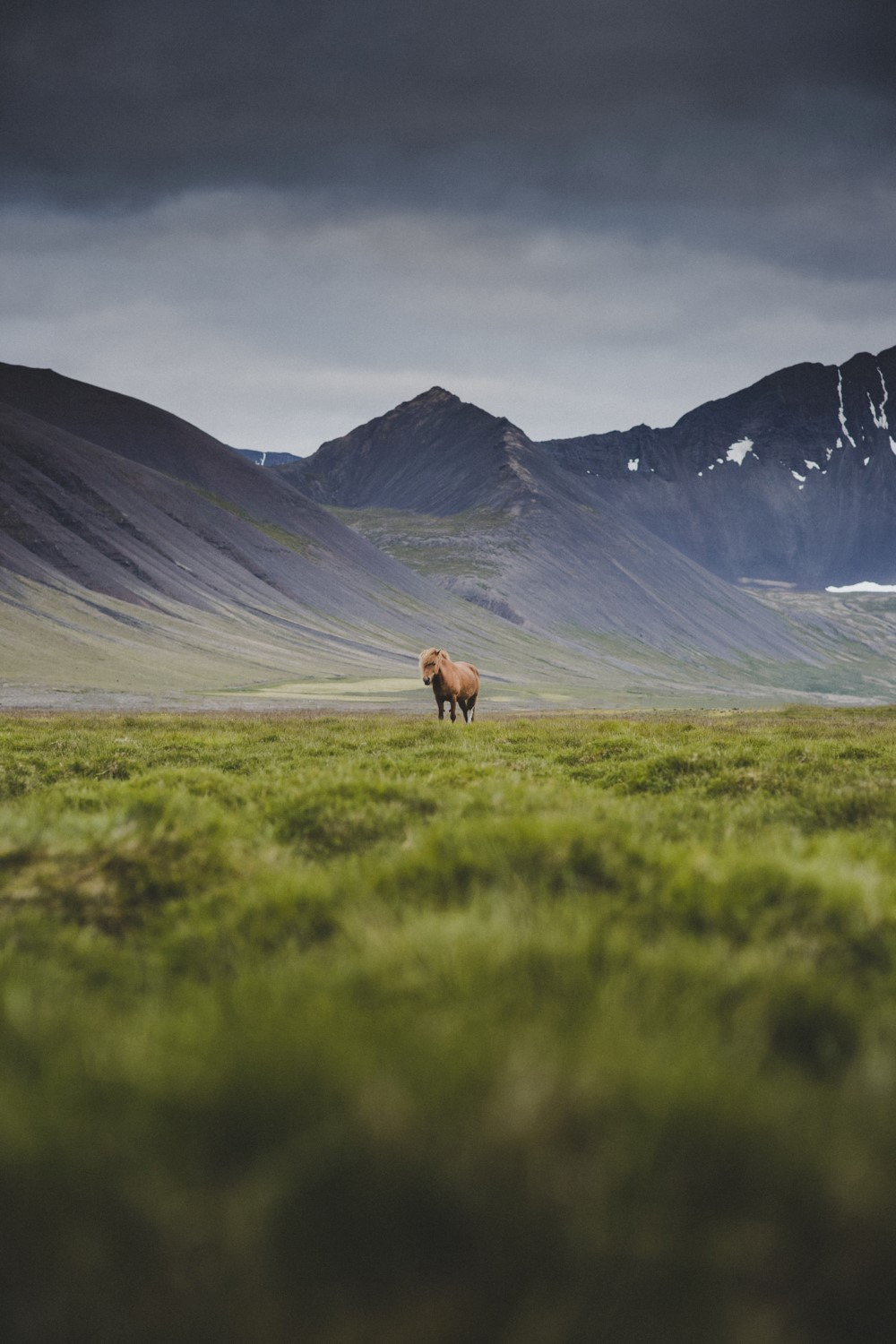 Icelandic horse in rugged nature