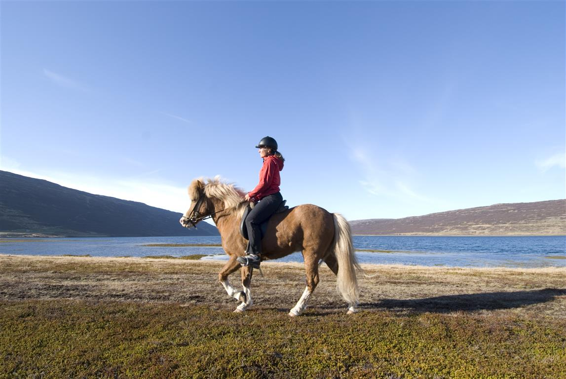 2019 year for women- Horse Icelandic riding pictures