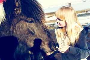 The Icelandic horse is very friendly
