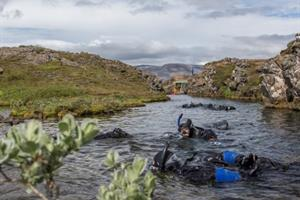 Snorkeling in Þingvellir National Park