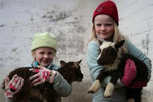 Lambing season in the spring