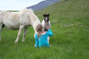Interacting with the Icelandic horse