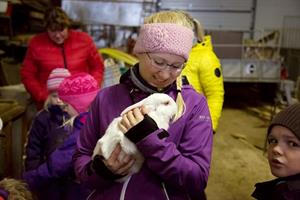 Farm Visit at Bjarteyjarsandur - Meet the farmers and experience authentic Icelandic country life