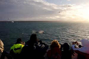 Whale watching in the afternoon sun
