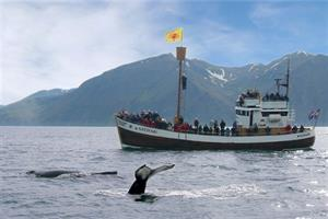 Whale watching from Húsavík