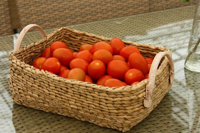 Geothermally grown tomatoes